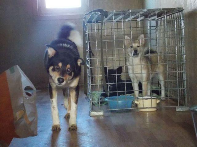 Женщина осталась без наследства: квартира ее сестры досталась приюту для собак